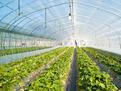 农业部印发《农膜回收行动方案》