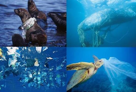 洋垃圾禁入中国后,欧盟宣布2030年前全部包装再利用