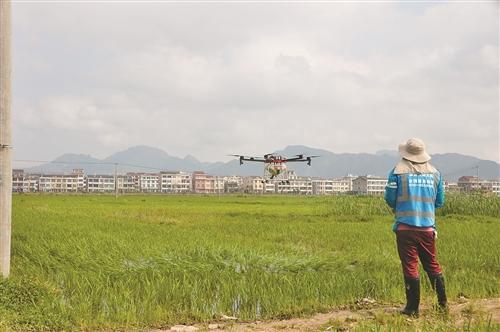 """农忙时节月入过万 但台州无人机植保专业""""飞手""""依然紧缺"""