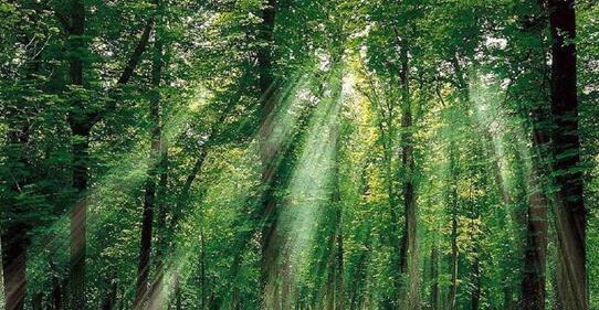 IFMS 2018――聚焦林业智慧化,推动林业现代化