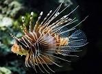 水下机器人或可用于减缓物种入侵