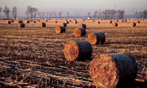 改良生物质燃料可做环保煤替代品