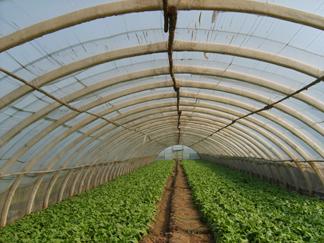 农业大棚骨架机,蔬菜大棚支架机